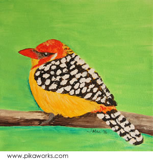 Barb the red and yellow barbet
