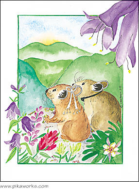 Greeting card about pika wedding card, wedding greeting card, wedding flower, wild flower, columbine flower, love card, romantic greeting card