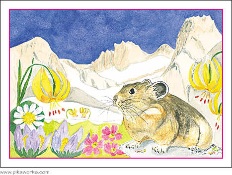 Greeting card about Easter Card, pika easter card, Pika Pete, lily, marigolds, primrose, Wind River Range, Wyoming, wildflowers