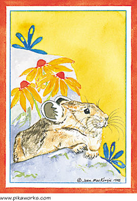 Greeting card about Capitol Peak pika, Colorado, pika, rock rabbit, thinking of you card, pika friendship card, friendship poem