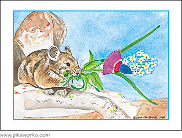 Greeting card about Colorado pika, Castle Peak pika, snowball flowers, pika birthday card, pika blank card, pika note card, pika art