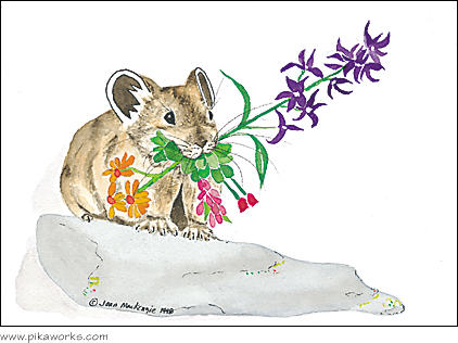 Greeting card about Grand Teton National Park pika, Wyoming pika, Colorado pika, pika birthday card, alpine birthday flowers, Pika Works logo pika