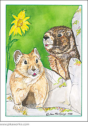 Greeting card about marmot art, Mt. Chiquita wildlife, Rocky Mountain National Park, Rocky mountain pika, humorous card, birthday card
