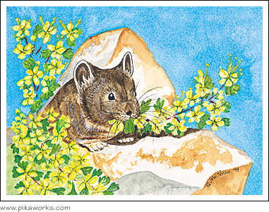 Greeting card about pika birthday greeting card, Bodie, California pika, ghost town pika, pika painting