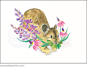 Greeting card about pika birthday card, shooting star flower, Lupine, pika art, wildflower birthday card