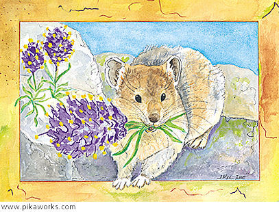 Greeting card about purple fringe flower card,  Colorado mountains, pika birthday card, pika gathering flowers card, American pika art