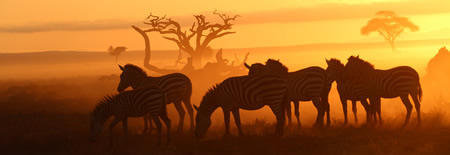 Zebras at Sunrise in Amboseli National Park, Kenya