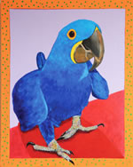 Gabe the Hyacinth Macaw